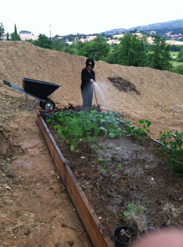 Tending to our organic garden...more boxes to come!